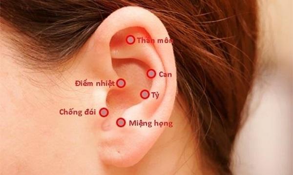 Vị trí các huyệt trên loa tai tương đương với các bộ phận cơ thể