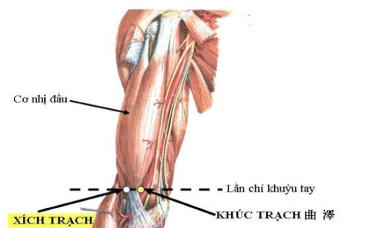 Ấn huyệt Xích trạch để chữa ho