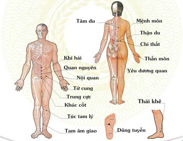 Hệ thống huyệt vị cơ bản trên cơ thể và những vị trí huyệt cần tác động để chữa hen suyễn