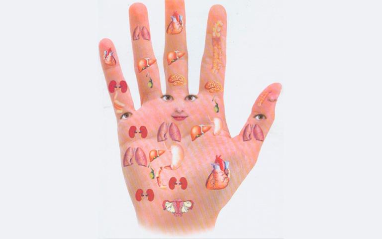 Vị trí phản chiếu các bộ phận cơ thể trên bàn tay