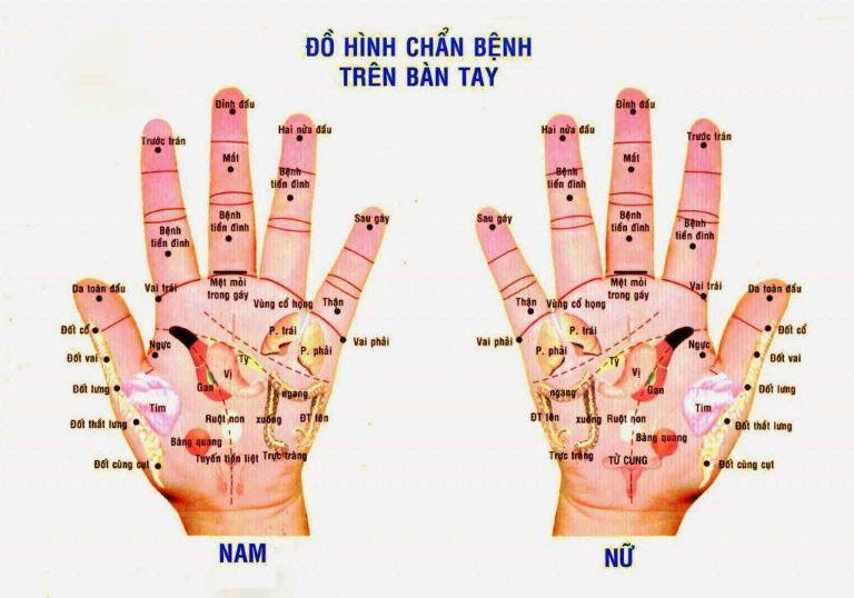 Day ấn huyệt trên bàn tay có khả năng điều trị các bệnh lý trên toàn cơ thể