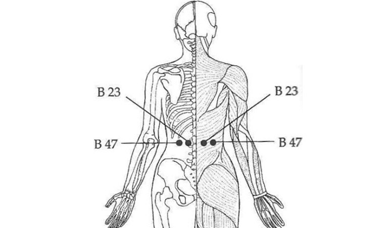 Vị trí cặp huyệt B23 và B47.