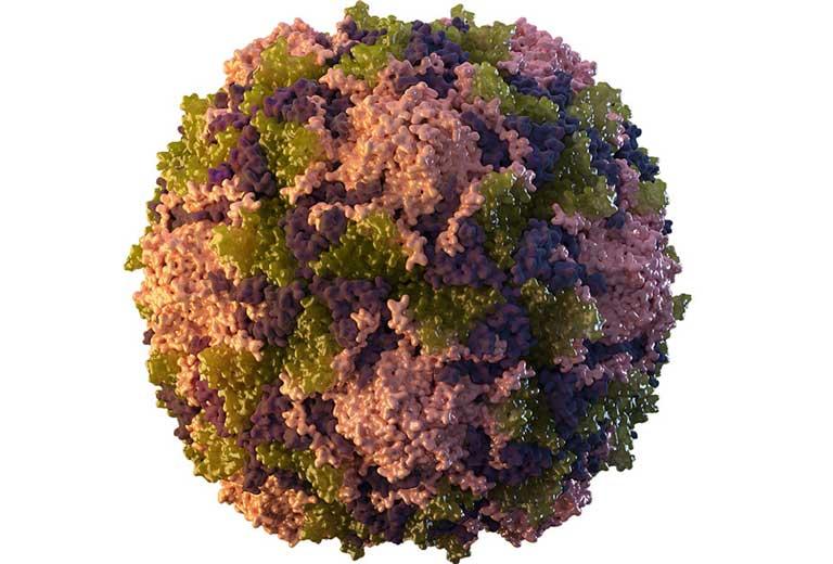 Nguyên nhân chính dẫn đến bệnh bại liệt là do Virus Polio