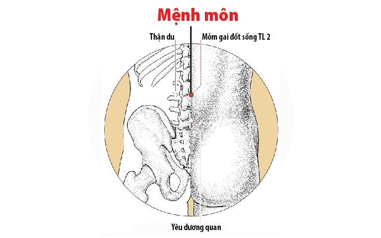 Huyệt Mệnh Môn và Thận du nằm trên vùng thắt lưng