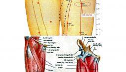 Hình ảnh giải phẫu vùng huyệt Bễ Quan