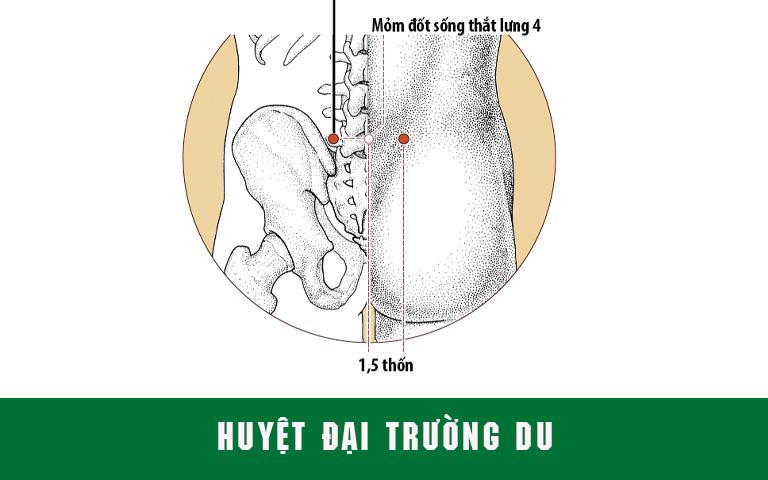 Đại Trường Du là huyệt điều trị tốt các bệnh ở vùng lưng, chi dưới và đường tiêu hóa
