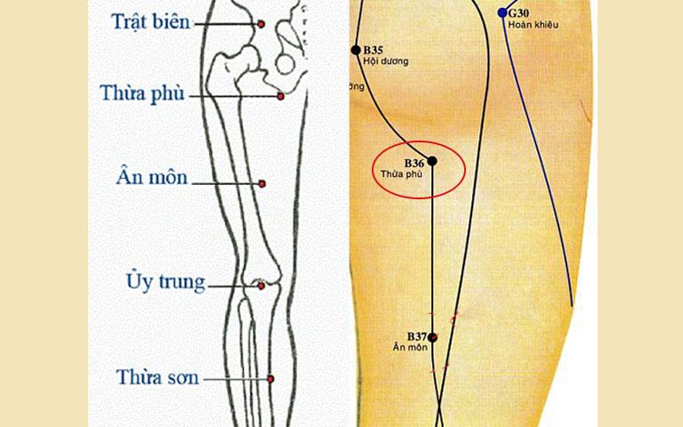 Vị trí huyệt Thừa Phù
