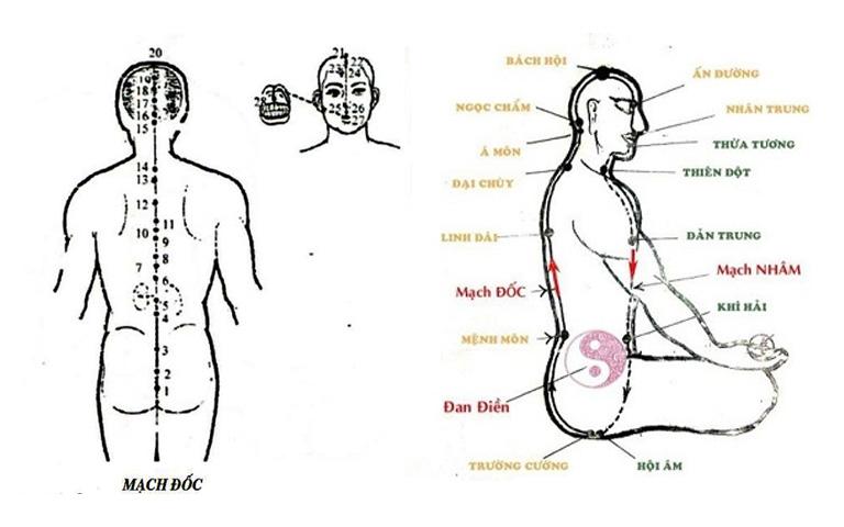 Huyệt Trường Cường - huyêt đầu tiên của Đốc mạch và là huyệt lạc nối với mạch Nhâm qua huyệt Hội Âm