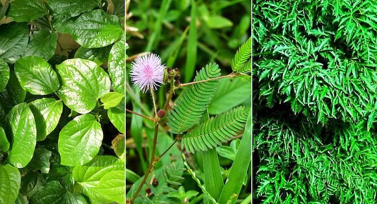 Các loại thảo dược giúp giảm đau lưng nhanh chóng
