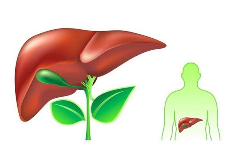 Hỗ trợ ệ thống tiêu hóa và giải độc trong cơ thể