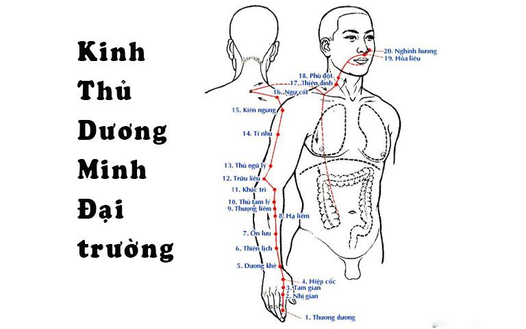 Huyệt Khúc Trì có khả năng chữa bệnh tương đối rộng nhờ khả năng kết hợp linh hoạt với các huyệt đạo khác
