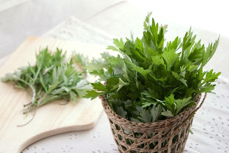 Bài thuốc từ cây ngải cứu làm giảm đau nhức xương khớp hiệu quả