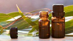 Tinh dầu tràm có hiệu quả ngăn ngừa triệu chứng đau đầu tại nhà