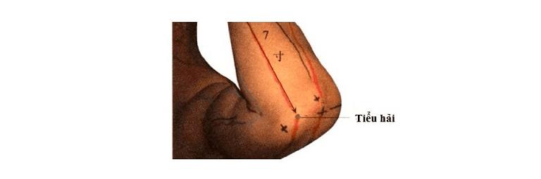 Huyệt Tiểu Hải là một trong những huyệt vị quan trọng trong cơ thể người